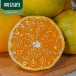 宜昌蜜桔橘子柑橘蜜橘橙子